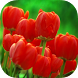 Flowers & Gardens Wallpapers by Wallapa