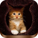 Cat Wallpapers for Cat Lovers by MasterLbrik