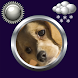 Dog Weather Clock Widget by Compass Clock and Weather