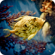 3D Betta Fish Wallpaper by Best HD Free Live Wallpapers