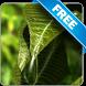 Leaf Water Drop free lwp by Infomedia BH