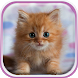 Cute Kittens Live Wallpaper by Free Wallpapers and Backgrounds