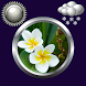 Flowers Weather Clock Widget by Compass Clock and Weather