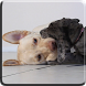 Puppies Video Live Wallpaper by Jacal Video Live Wallpapers