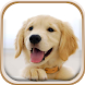 Cute Puppies Live Wallpaper by Free Wallpapers and Backgrounds