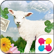 Little Lamb Wallpaper Theme by +HOME by Ateam