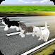 Kitten Cat Craft Racing:Cute Cat World Tournament by Specular Games