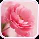 Pink Roses Live Wallpaper! by Live Wallpaper HD Studio