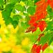 Autumn Motives 1 Wallpaper by Zimin Adrian