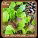 Best DIY Grow Salad Greens by GoDream Studio