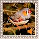 Finch Birds Sounds by Godev Houz