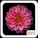 Bloom Flower OS Live wallpaper by Live Wallpaper Workshop