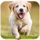 Dog Wallpapaers & Puppy Backgrounds by ⭐ 7Fon Wallpapers