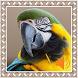 Macaw Birds Sounds by Godev Houz