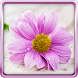 Gentle Flowers Live Wallpaper by HQ Awesome Live Wallpaper
