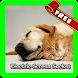 Official Story : New Pet Shop by Norah Pro App