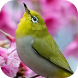 Lovely Spring 3d Locker Theme by Jayesh lad