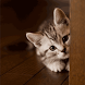 Cute Kitty Live Wallpaper by Live Wallpaper Workshop