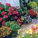 Цветы в саду by MobileDevComunity