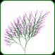 Math Art: Trees by NextGen KidsMath
