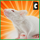 City Mouse Simulator by Confun GameStudio