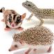 かわいい小動物図鑑 by BIGLOBE Inc.