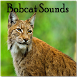 Bobcat Sounds by Playstore Sounds Inc