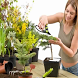 Комнатные растения by BSF