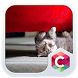 Cute Little Kitty Clauncher by CG-Live-Wallpapers