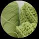 Free Crochet Patterns by Zratin