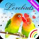 Animated Love Birds Keyboard Theme by Keyboard Arts Themes