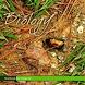 11th NCERT Biology Solution by PRABHAKAR