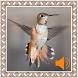 Colibri Birds Sounds by Godev Houz