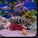 Aquarium Video Wallpaper by Pawel Gazdik