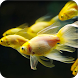 Betta Fish Live Wallpaper by Best HD Free Live Wallpapers