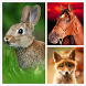 Animals LIve Wallpaper by HQ Awesome Live Wallpaper