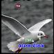 Bird Alarm by JLD International,inc
