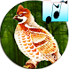 Decoy for grouse whistle and Voice for hunting by ThreeMobile