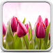Tulips Live Wallpaper by Creative Factory Wallpapers
