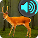 Decoy for Roe Deer Sounds for Hunting by ThreeMobile