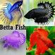 Betta Fish by siojan