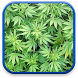 Marijuana Live Wallpaper by Aleso