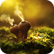 Amazing Nature Live Wallpaper by FreeWallpaper