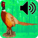 Decoy For Hunting Pheasant by ThreeMobile