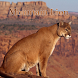 Mountain Lion Sounds by PatApps