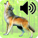 Decoy For Predator Sounds Of Hunting by ThreeMobile