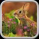 Rabbit Wallpaper by MasterLwp