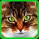 cat live wallpaper free by NetApps