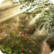 Fantasy Forest Live Wallpaper by WallpapersLove