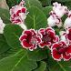 Вырастить цветок by AppPromoStyle